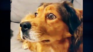 ВеСеЛыЕ ЖиВоТнЫе ПЁСЕЛЬ РЖАКА Приколы Щенки и собаки Смешные собаки