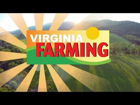 Virginia Farming: Christmas Tree