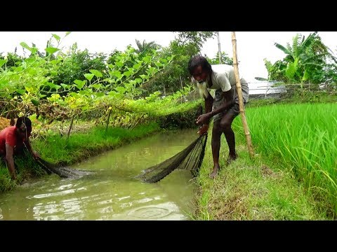 Net Fishing with beautiful nature | Real Village Fishing by Daily Village Life (Part -2)