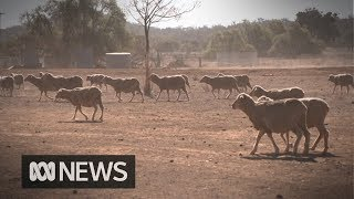 The farmers defying drought by restructuring their businesses