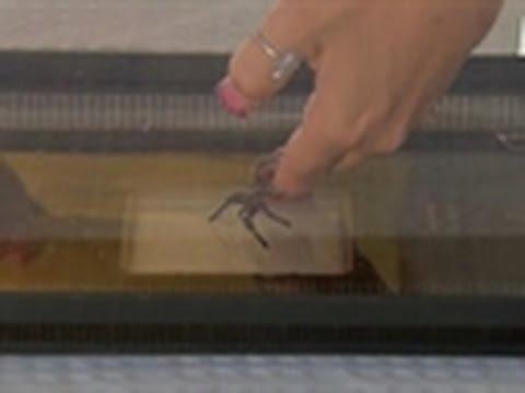 Cradling Big Hairy Spiders   My Extreme Animal Phobia