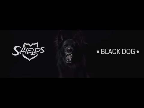Shields  Black Dog