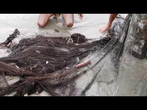 Net Fishing | Traditional Net Fishing In Village
