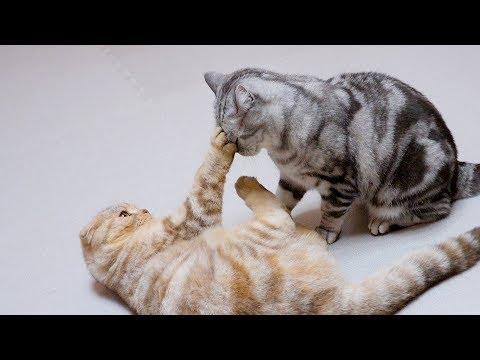 수리vs라온 귀여운 결투