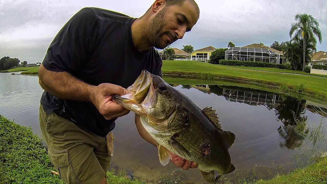 Bass fishing giant florida golf course pond bass 2 youtube for Buy bass fish for pond
