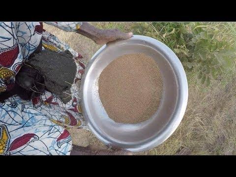 Découverte du fonio, une céréale traditionnelle.