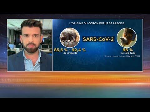 Coronavirus: ce que disent les dernières études scientifiques sur son origine
