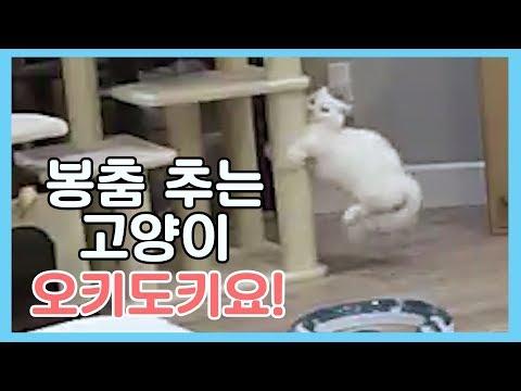 봉춤 추는 고양이 - 오키도키요