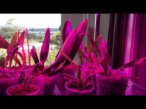 Orchids under led grow lights and heat pads for the winter