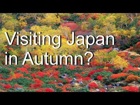 Momijigari e curiosi festival giapponesi per gli amanti del foliage