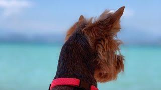 VLOG:На море с собакой//На пляже с собакой в Италии//Бассейн для собак