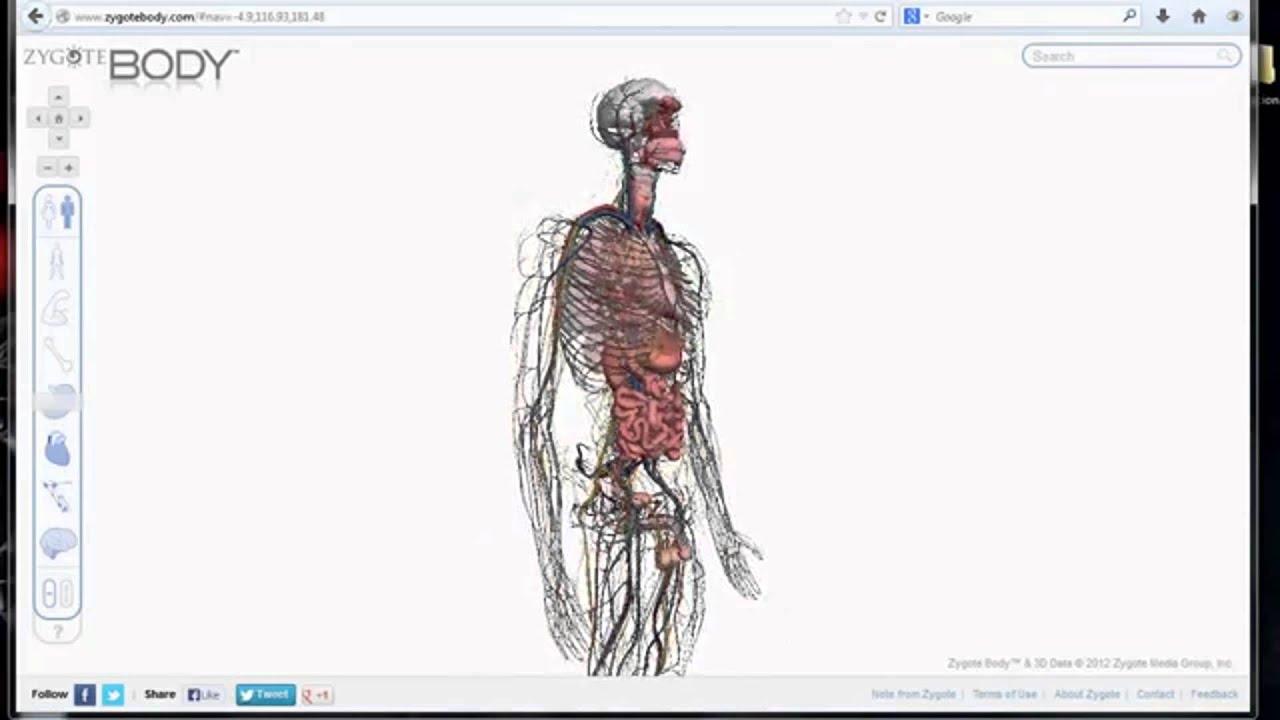 Anatomia del cuerpo humano organos huesos y m s conoce cuantos a os de vida te quedan1 youtube - Interior cuerpo humano organos ...