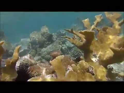 Snorkeling St. John USVI June 2015