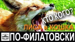 Эпическая битва дикой лисы и домашней кошки за сосиску!