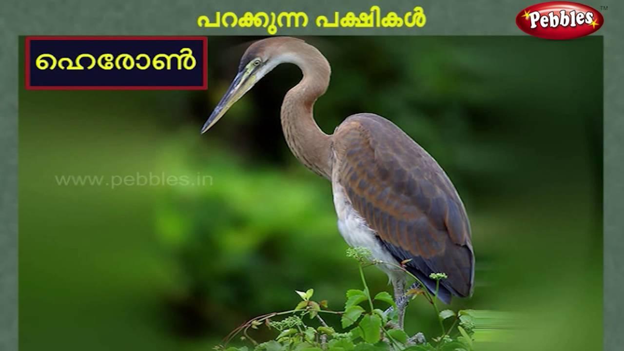 Flying Birds Preschool Education In Malayalam Kids Learning In Malayalam Youtube