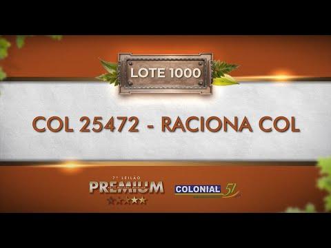 LOTE 1000   COL 25472