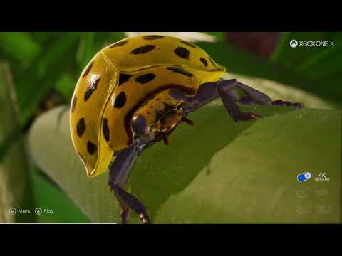 Xbox One X 4K on 1080 P Insects 4K assets on HD