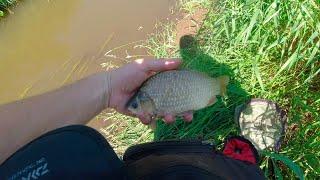 256 Мормышинг Карась в микро речке 5 видов рыб Жор окуня
