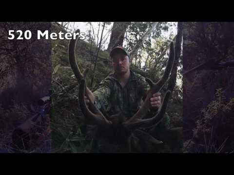 Sambar Deer Hunting Australia