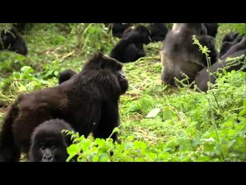 Titus Gorilla King documentary english in HD part 1