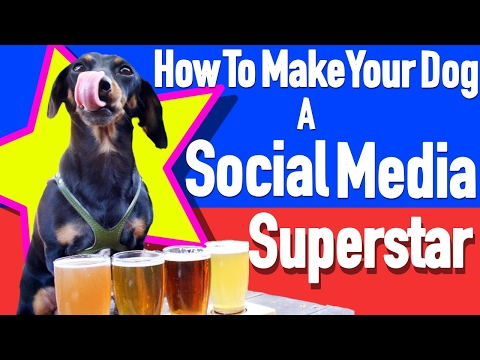 How to Make your Dog a Social Media Superstar! Crusoe the Celebrity Dachshund!