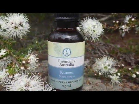 Kunzea Essential Oil | Essentially Australia