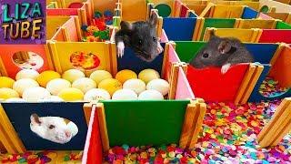 Лабиринт для Питомцев 👍 Маленькие Крысята проходят Лабиринт 🐭 LizaTube