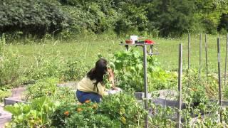 Pest Control for Marigolds in a Garden : Marigold Gardening