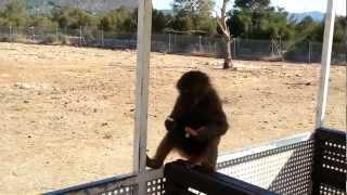 Safari Zoo Mallorca - Affe fährt mit