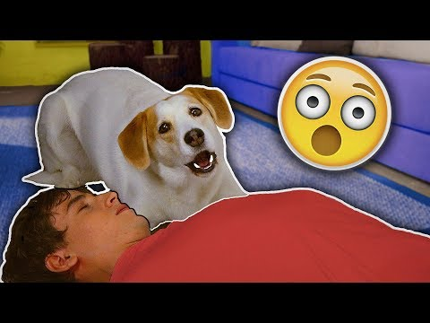 My dog reacts to me having a HEART ATTACK! 😱
