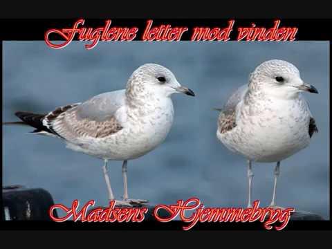 fuglene flyver mod vinden