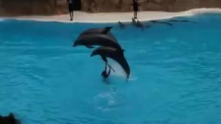 �������� ���� Funny video fish dancing ������