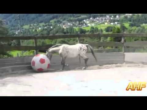 Funny And Cute Horses Playing With Ball Compilation HD AHF | Funny Horse