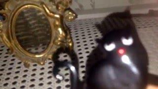 Чёрная кошка настоящий,страшный квест!!!