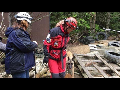 Záchranný pes hledá v sutinách figuranta