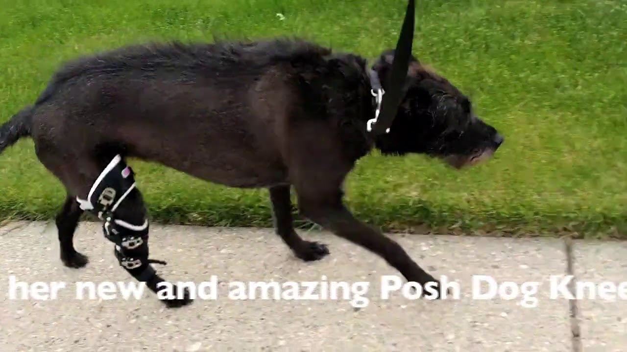 Dog Knee Brace Reviews | Best Brace For Dogs
