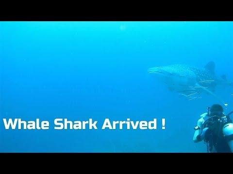 Kev in Thailand, The Mermaid Dive Centre Pattaya Jomtien ! Vlog 283