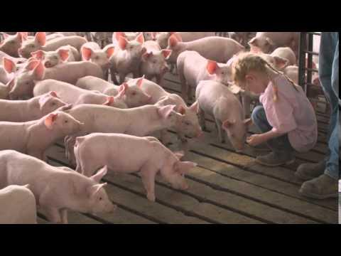 Illinois Farm Bureaus - Matthew Starr