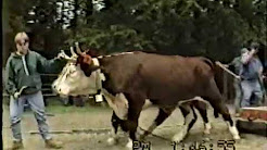 Conquerall Mills Ox and Horse Pull 1992