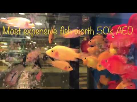 Worlds leading AQUARIUM SHOWROOM now in UAE over 1lakh different fishes. So beautiful