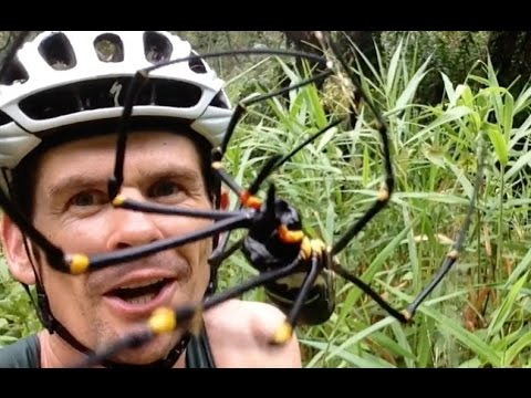 Elliot Hulse Spider Licking Challenge Round #2