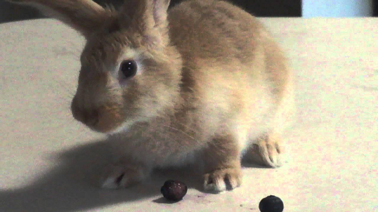 Trix Rabbit Name