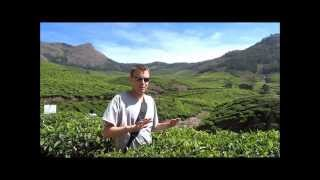 Exploring The Tea Plantations of Munnar, India