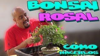 видео Роза (Rosa L.)