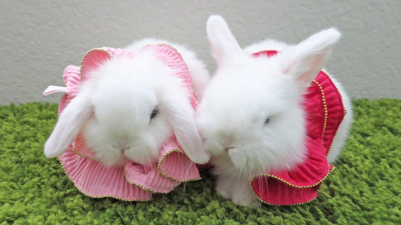 baby bunny lovers dress up & kiss! - youtube