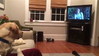Dog Reacts to House of Cards Opening