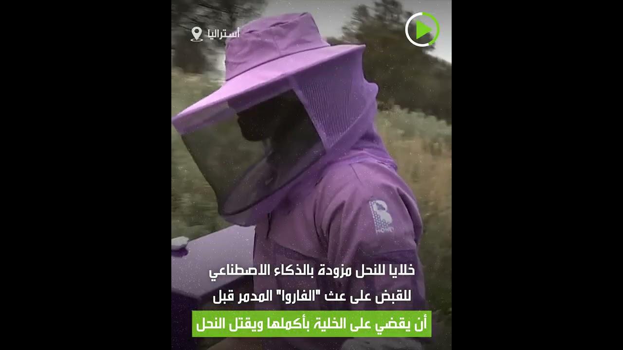 تكنولوجيا وتقنيات دفاعية لحماية النحل من أعدائه!  - 15:54-2021 / 5 / 16