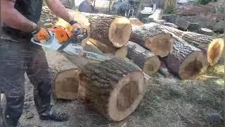 Cutting oak logs with stihl ms 500i