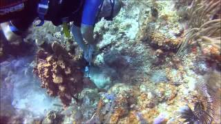 Belize World Class Diving, Turneffe Atoll