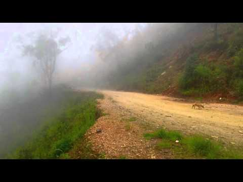Mysterious and atmospheric, thickest fog in the mountains of Timor Leste